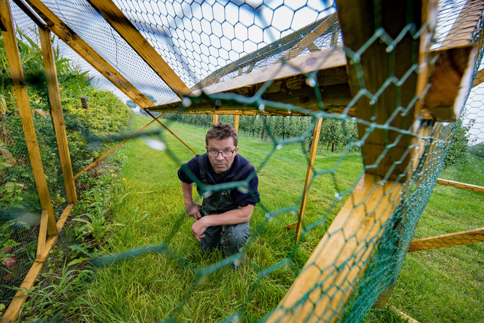 Fruitteler Philip de Groen heeft veel last van kraaien en kauwen. Hij heeft  toestemming om met een kraaienkooi vogels te vangen om zijn oogst te beschermen.