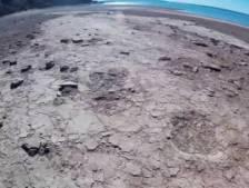 Des empreintes de dinosaures découvertes dans un lac en Argentine