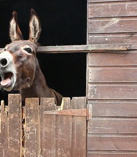 Milieuactiviste Greta krijgt ezeltje voor doorreis
