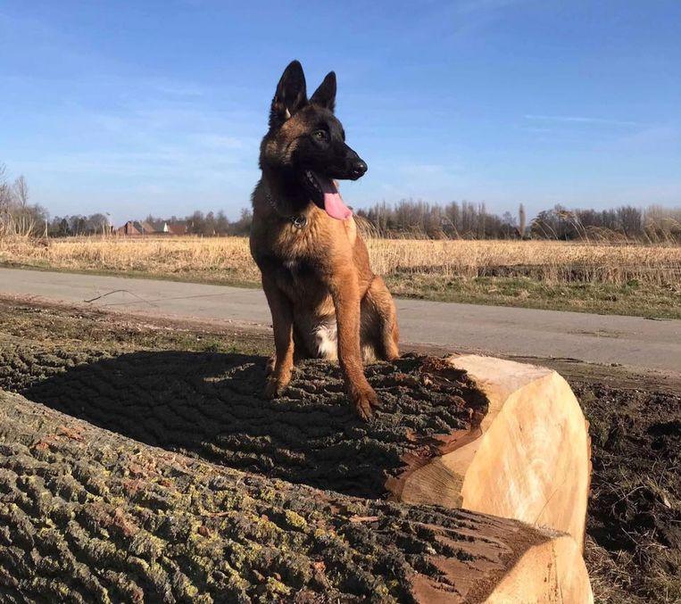 De hond Toby overleed na een wandeling in de omgeving van de Collemanstraat.