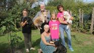 San Anton Belgium viert vijfjarig bestaan