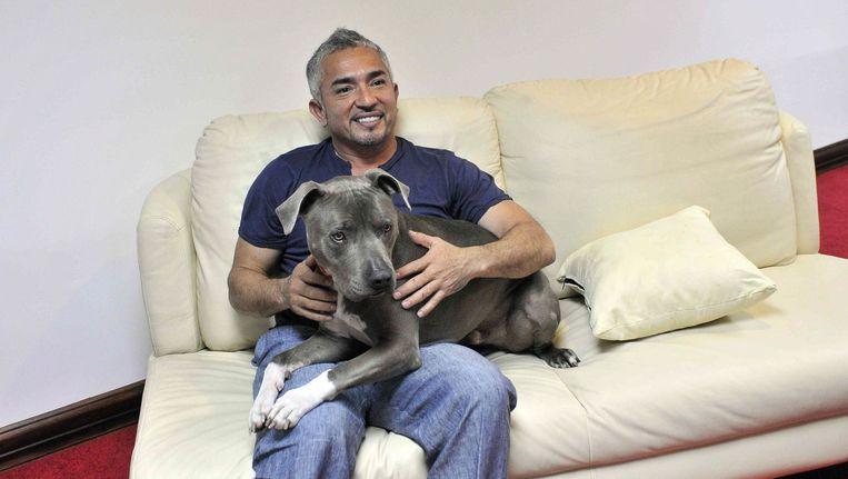 De Mexicaanse hondentrainer Cesar Millan, ook wel bekend als de 'hondenfluisteraar'. Beeld epa