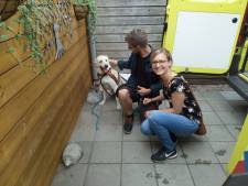 Vermiste Duitse hond duikt op in Meddo, 60 kilometer van huis