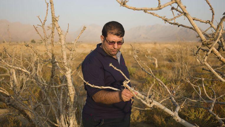 Amin Should op de pistacheboomgaard van zijn familie in Pouze Khoon, in het zuiden van Iran. De bomen zijn allemaal dood, omdat in de grond geen water meer zit Beeld Newsha Tavakolian /  Magnum