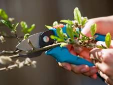 Gratis snoei-afval brengen kan voorlopig niet in Apeldoorn: het is té druk bij de stort
