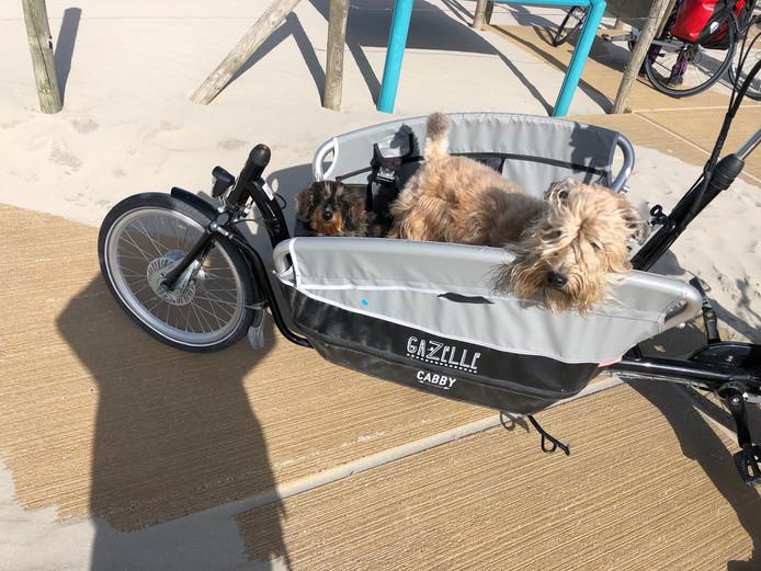 Ook de honden mogen mee op vakantie. En in de hitte laat je ze natuurlijk niet zelf lopen. Dan maar in de bakfiets!