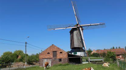 """Pietendriesmolen Ursel verhuizen naar Brugge? """"Niets van aan: we willen de molen zo snel mogelijk weer laten draaien"""""""