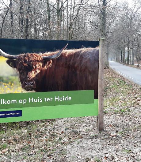 Enge grote grazers?: 'Ook een roodbonte koe beschermt haar kalf'