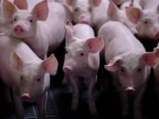 Boer vindt dat hij recht heeft op verbouwing varkensstal Leersum
