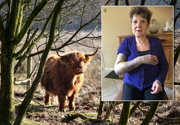 Annie Bankers uit Milheeze is op de horens genomen door een Schotse Hooglander.