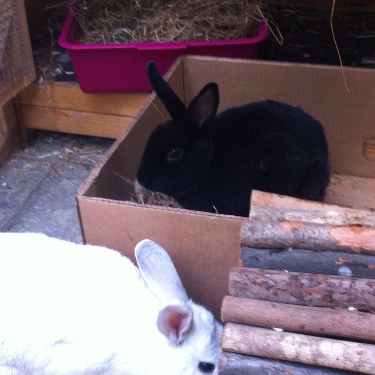 Een konijn in een bananendoos. Beeld