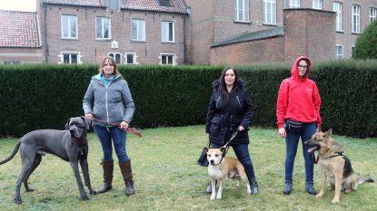 Dierenliefhebbers pleiten voor Herentalse hondenweide