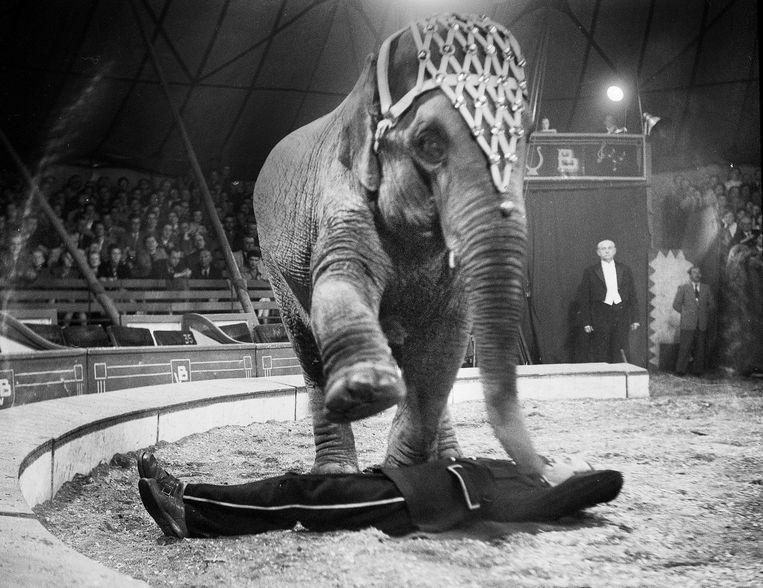 Circus 1954. Beeld Eddy Posthuma de Boer