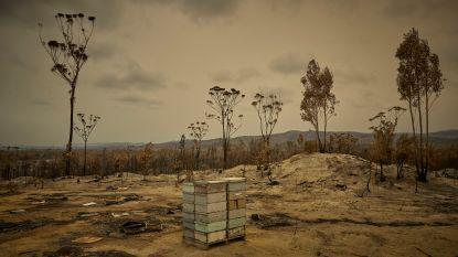 Geen water, wel nog bier: Australische stad Murrurundi kampt met extreme droogte