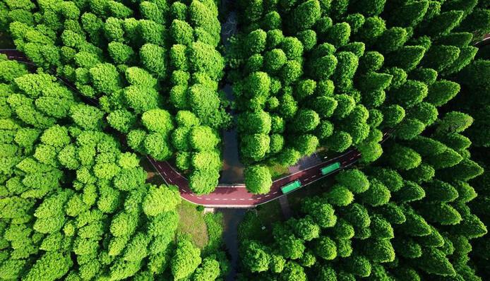 Le Yellow Sea National Forest Park à Dongtai, en Chine, est un bon exemple de reforestation gérée