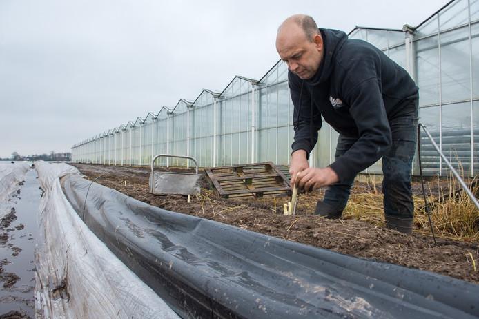 Antonio van Beek steekt al asperges buiten op het verwarmde terrein.