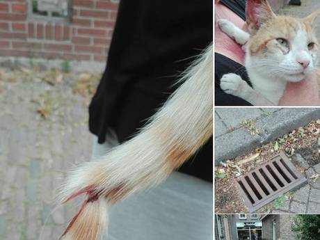 Kat gewond in put gedumpt in Oldemarkt, politie zoekt dader
