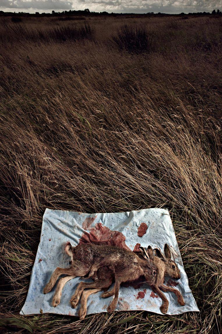 Roadkill Beeld Leonardo Horta