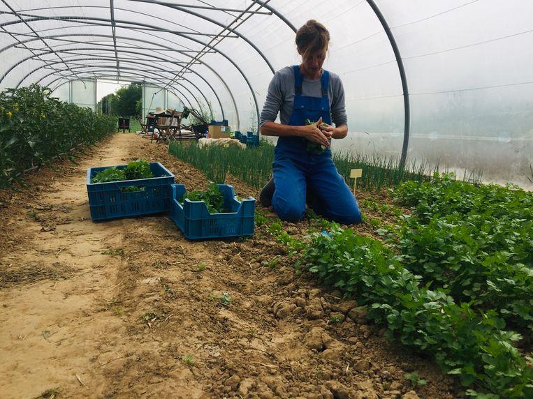 Dankzij de tunnelteelt kan Katrien de seizoenen verlengen en het hele jaar door groenten kweken.