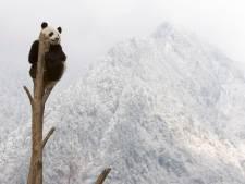 Helft van planten en dieren in natuurgebieden in gevaar door klimaatverandering