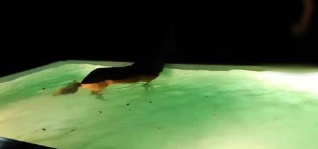 Paard uit zwembad gered in Limburgs dorp