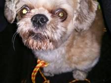 Politie zoekt eigenaar van gevonden hondje in Rijssen