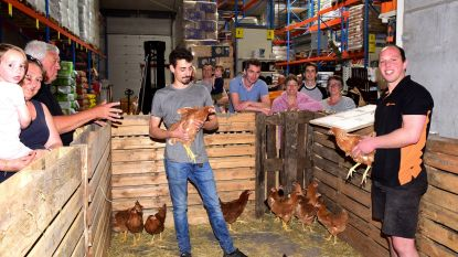 Na 15 jaar kippenactie 'Kukeleku': al meer kippen verkocht in Gooik dan dat er inwoners zijn (en het GFT-afval is meteen ook meer dan gehalveerd)