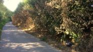 Zware natuurvergiftiging in Herzele: honderden meters planten en bomen kapot gespoten