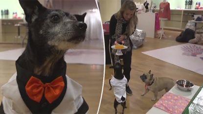 Hondenrestaurant opent binnenkort deuren in Antwerpen