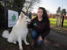Rechter: hondentrainer uit IJsselmuiden moet binnen zeven dagen stoppen