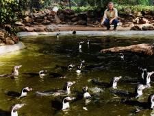 Opluchting in Avifauna: pinguin in goede gezondheid terug