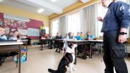 Drugshonden snuffelen op school
