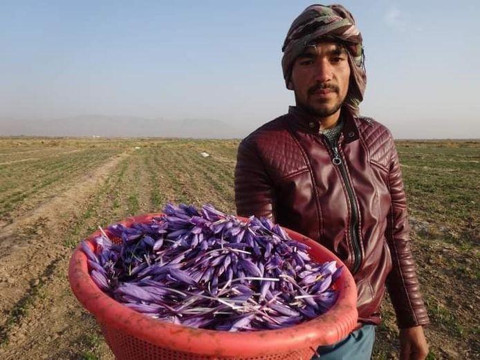 Marc Jeannin koopt het saffraan voor het dubbele van de prijs in bij de plaatselijke Afghaanse boeren.