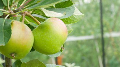 Natuurpunt Houtem zoekt appelboomgaarden om bio-appelsap te maken