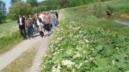 Alternatief zomerprogramma met veel zoektochten langs wandel- en fietspaden