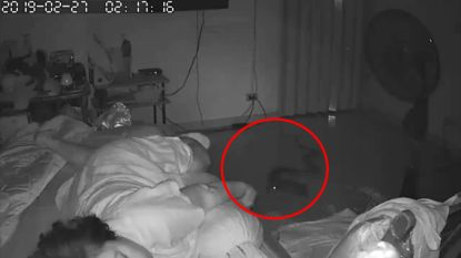 Enge beelden: python valt slapende oma aan