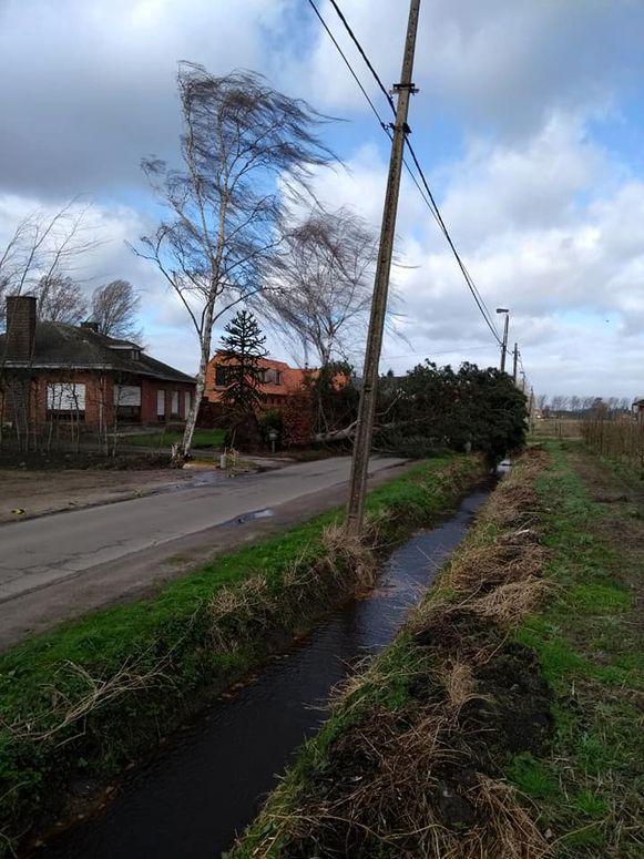In de Bloempotstraat in Meerdonk belandde een boom op de weg.