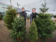 Traditionele kerstboom bedreigd door klimaatverandering en kevers