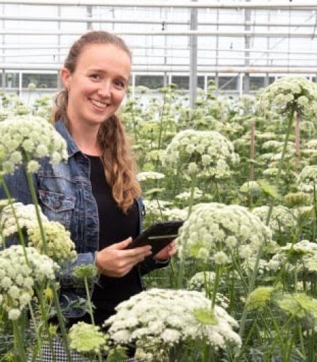 Rijk Zwaan groeit met groentezaden naar omzet half miljard euro