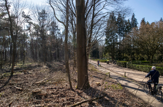 Het kaalgeslagen bos bij 't Gelloo.