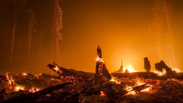 Brandende boomstronken in Palangkaraya op Borneo, waar bos plaatsmaakte voor een palmolieplantage. Beeld getty