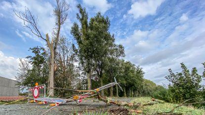 Jaagpad langs Schelde versperd door vallende takken: brandweer deed al 85 interventies in Vlaamse Ardennen