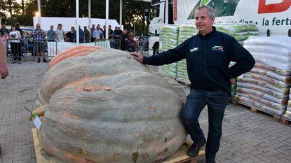 Zwaarste pompoen weegt 903 kg (en hij is al een beetje 'afgevallen')