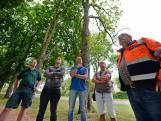 'Kap veel bomen bekende kastanjelaan in Enschede onvermijdelijk'