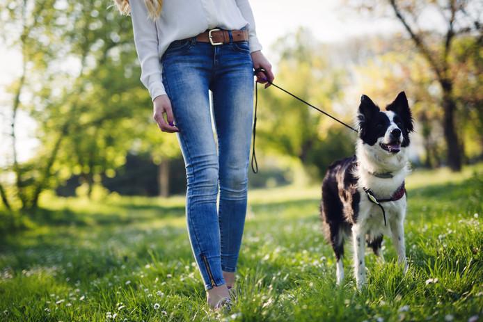 Dubbel goed nieuws voor hondenbezitters in de gemeente Maasdriel.