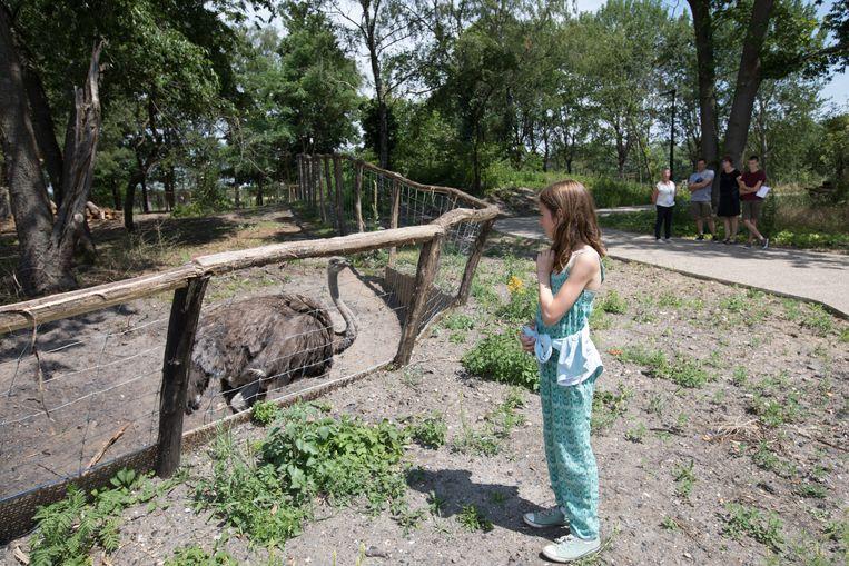 Een kleine 60 dieren met onder andere struisvogels en emoes verblijven op LaBiomista, de oude site van de mijn en later de zoo van Zwartberg.