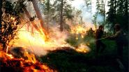 Na de Noordpool staat nu ook Siberië in vlam: bosbranden teisteren gebied zo groot als België