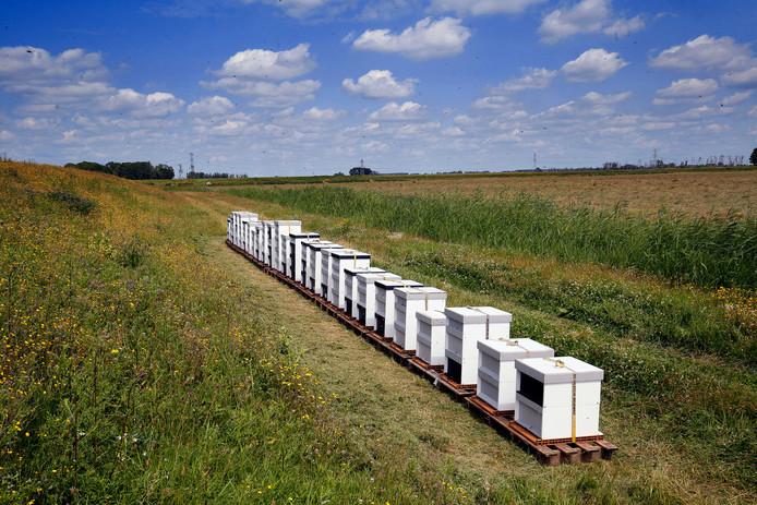 Op tien verschillende plekken in de Biesbosch staan bijenkasten.