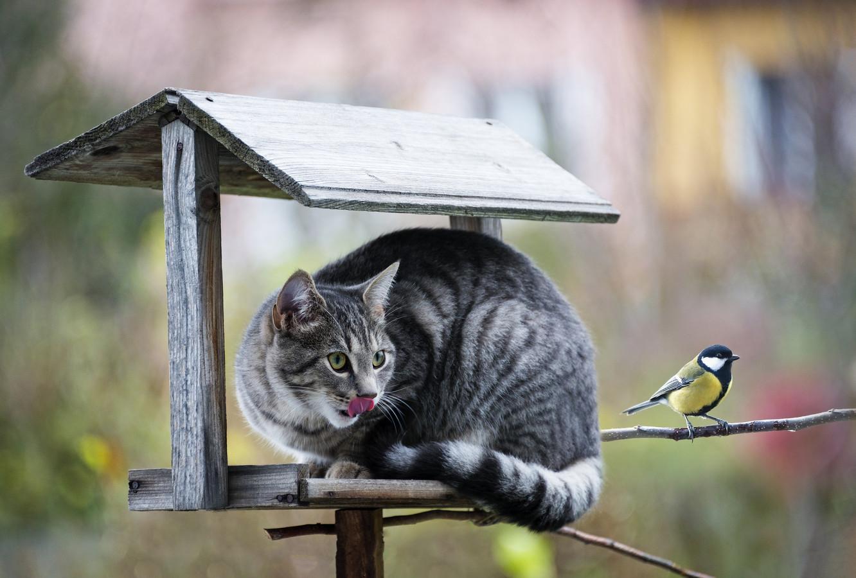 Een kat jaagt op een vogel.