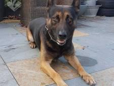 Politiehond Sniper speurt inbreker in Amersfoort op